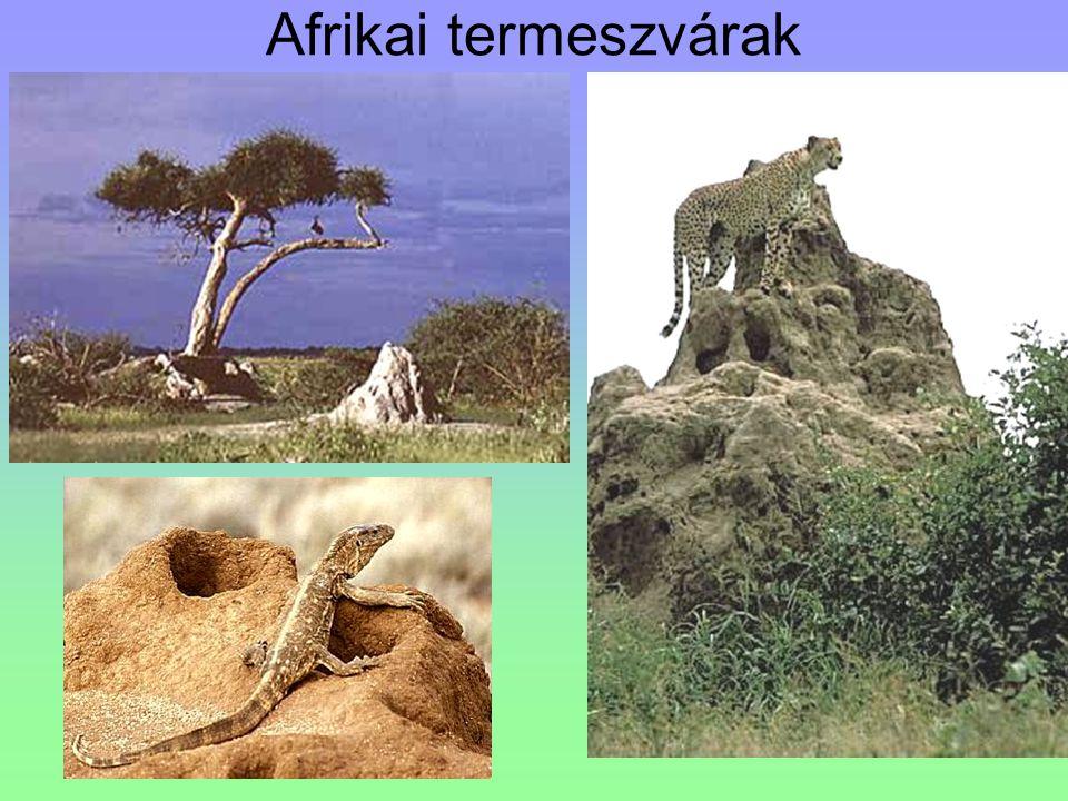Afrikai termeszvárak