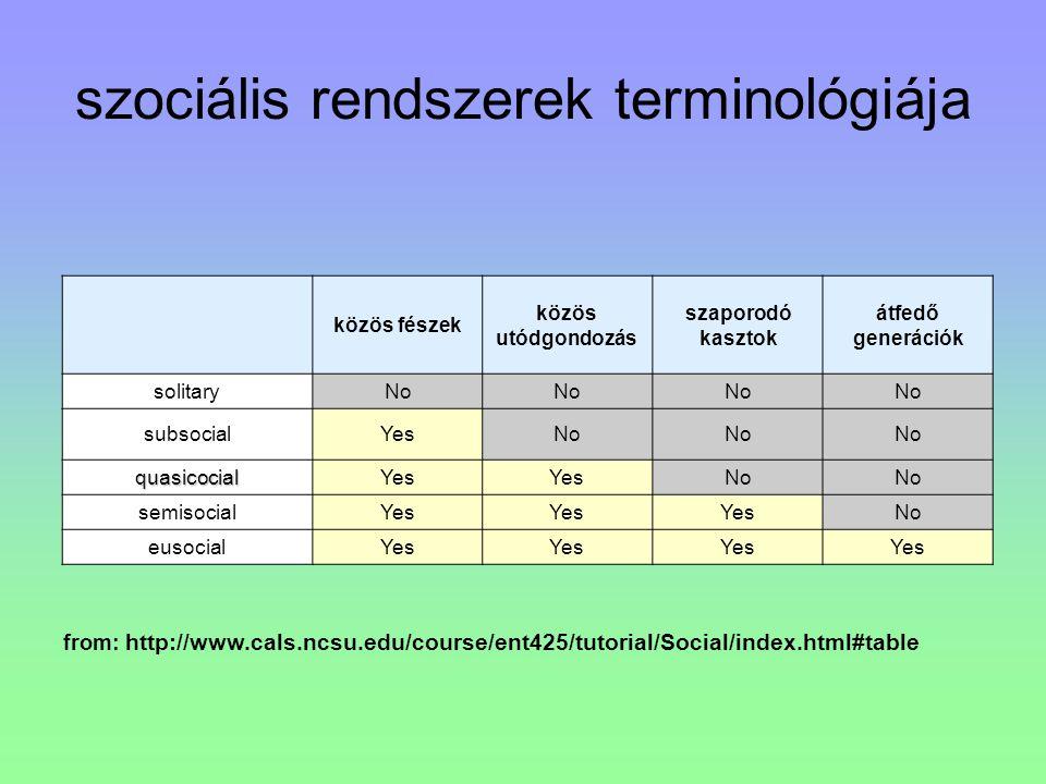from: http://www.cals.ncsu.edu/course/ent425/tutorial/Social/index.html#table közös fészek közös utódgondozás szaporodó kasztok átfedő generációk soli