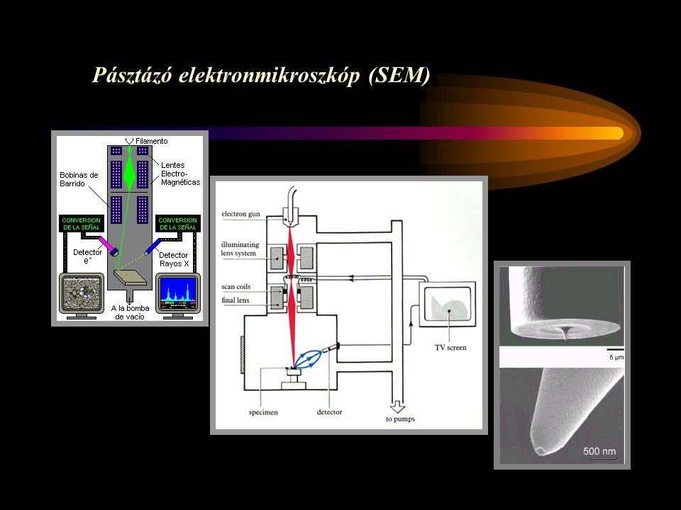 Pásztázó elektronmikroszkóp (SEM)