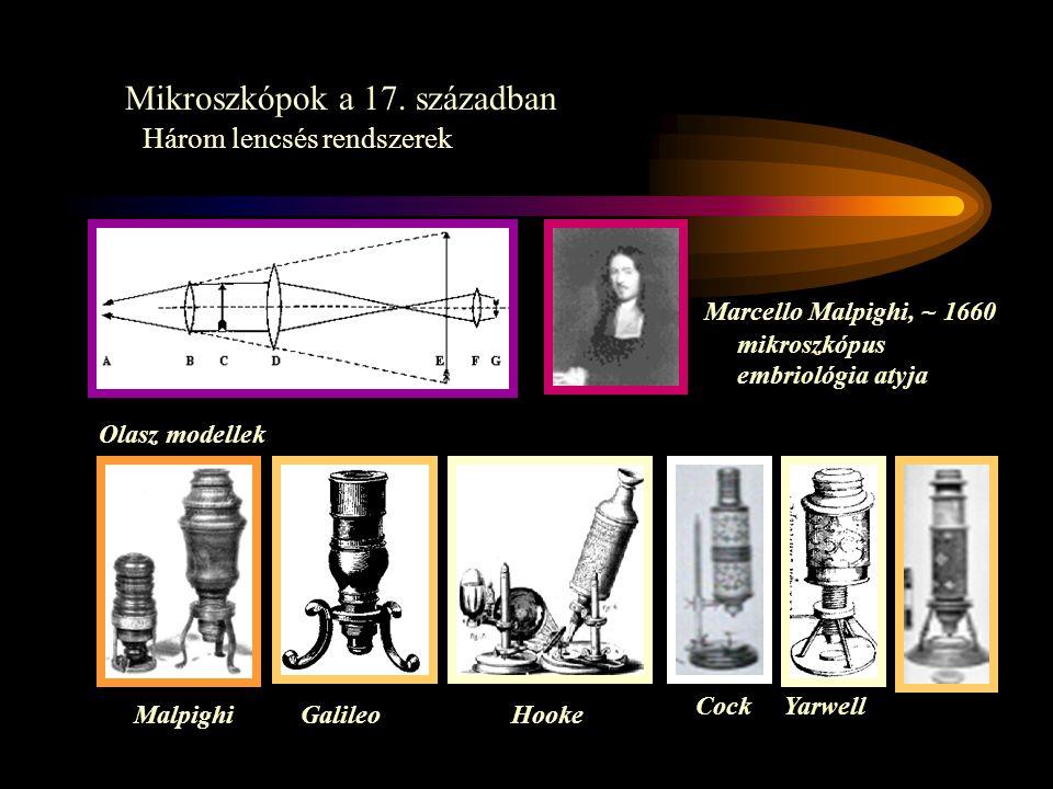 Mikroszkópok a 17. században Három lencsés rendszerek Olasz modellek Marcello Malpighi, ~ 1660 mikroszkópus embriológia atyja GalileoMalpighiHooke Coc