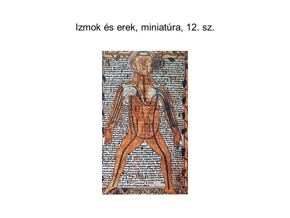 Izmok és erek, miniatúra, 12. sz.