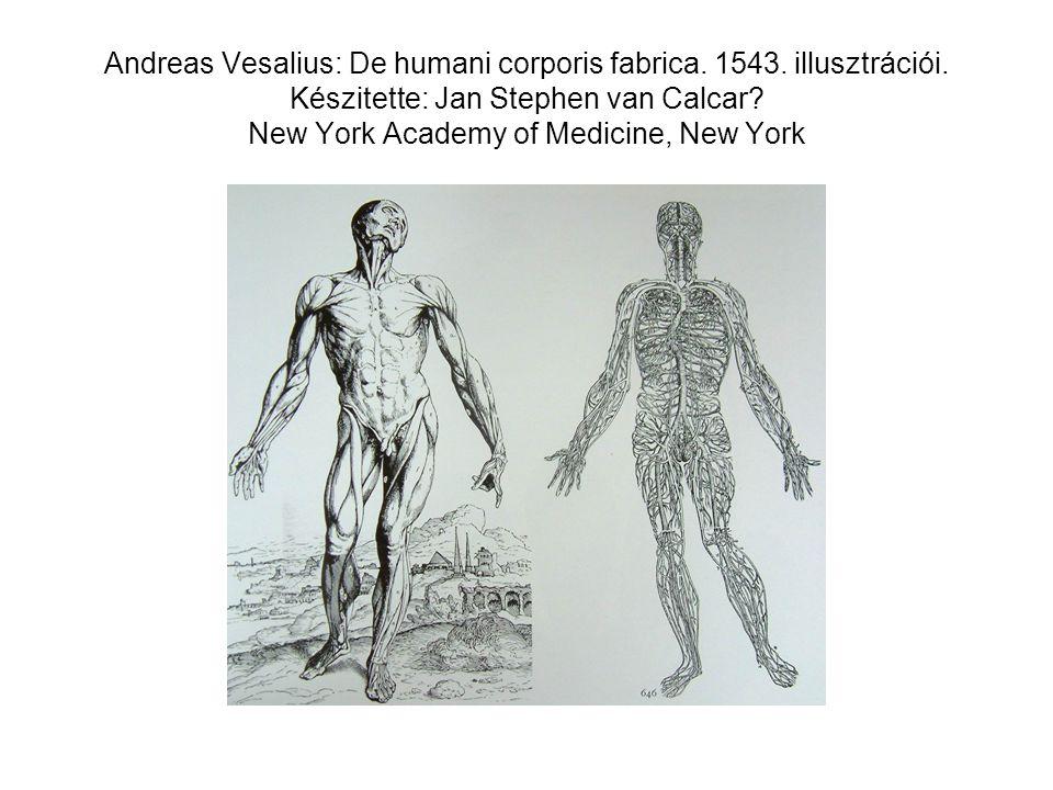 Andreas Vesalius: De humani corporis fabrica. 1543. illusztrációi. Készitette: Jan Stephen van Calcar? New York Academy of Medicine, New York