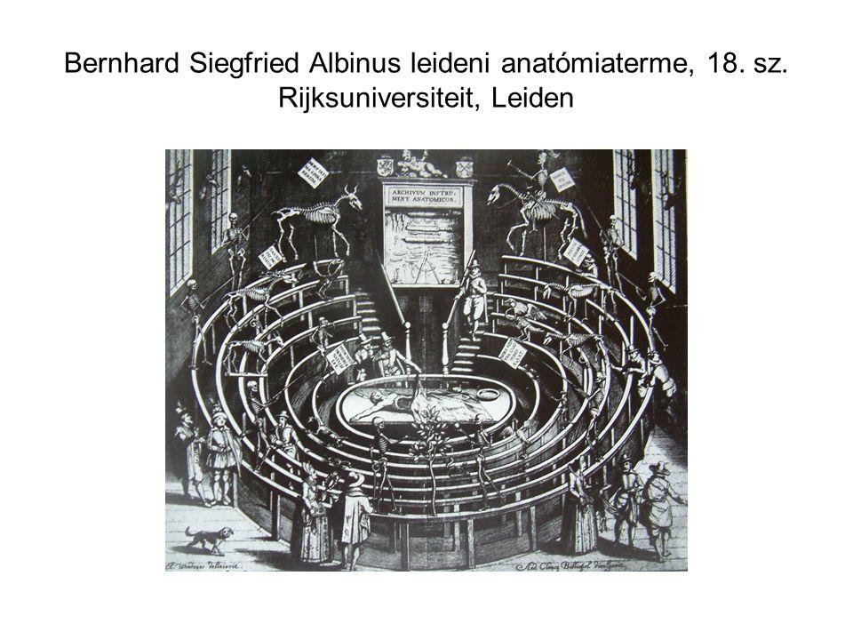 Bernhard Siegfried Albinus leideni anatómiaterme, 18. sz. Rijksuniversiteit, Leiden