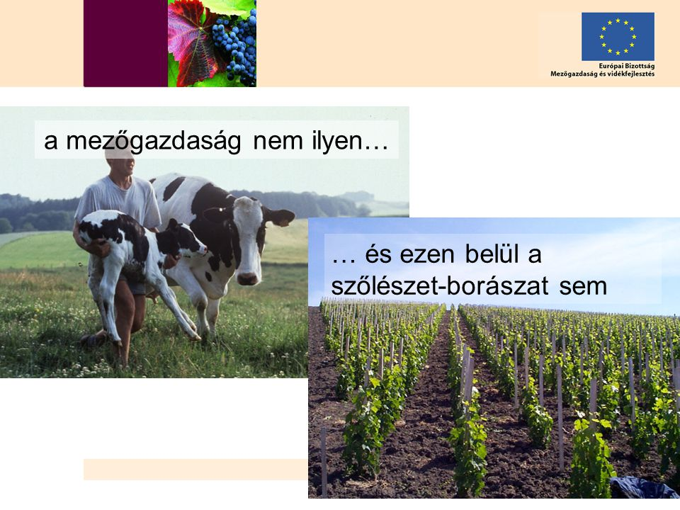 3 a mezőgazdaság nem ilyen… … és ezen belül a szőlészet-borászat sem