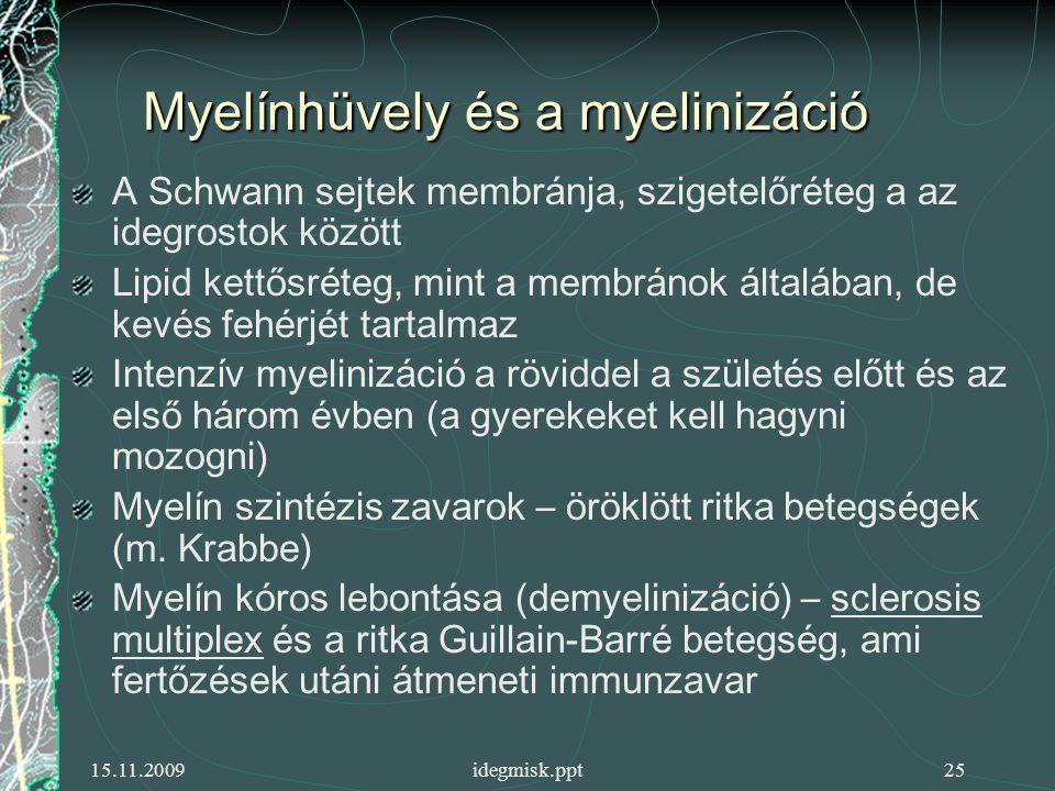 15.11.2009idegmisk.ppt25 Myelínhüvely és a myelinizáció A Schwann sejtek membránja, szigetelőréteg a az idegrostok között Lipid kettősréteg, mint a membránok általában, de kevés fehérjét tartalmaz Intenzív myelinizáció a röviddel a születés előtt és az első három évben (a gyerekeket kell hagyni mozogni) Myelín szintézis zavarok – öröklött ritka betegségek (m.