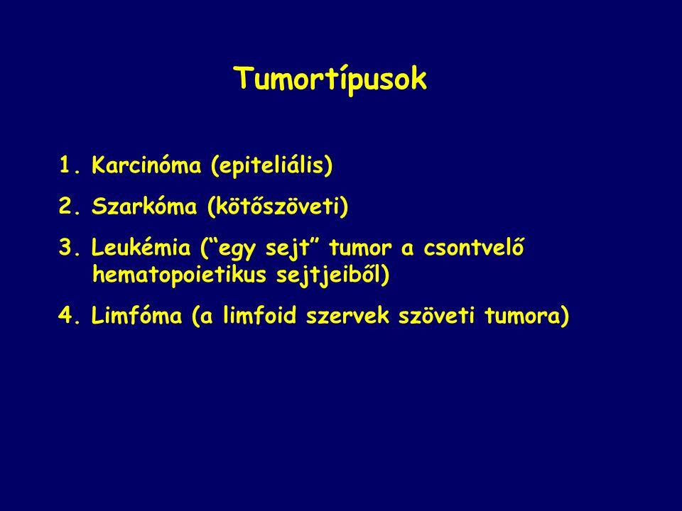 """Tumortípusok 1. Karcinóma (epiteliális) 2. Szarkóma (kötőszöveti) 3. Leukémia (""""egy sejt"""" tumor a csontvelő hematopoietikus sejtjeiből) 4. Limfóma (a"""