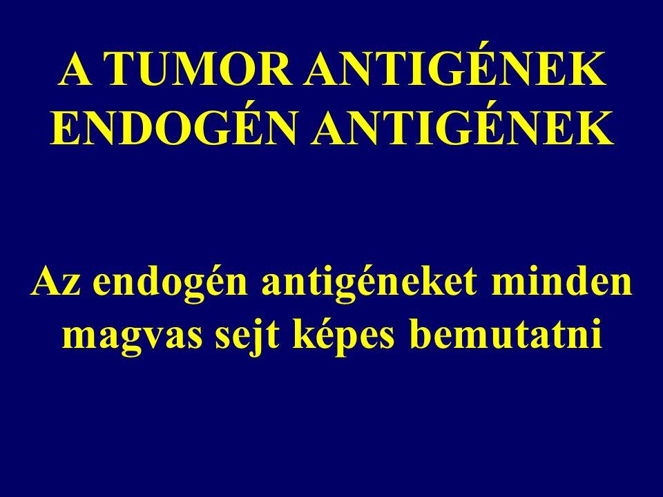 A TUMOR ANTIGÉNEK ENDOGÉN ANTIGÉNEK Az endogén antigéneket minden magvas sejt képes bemutatni