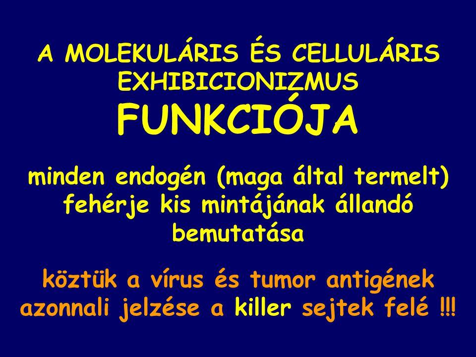 A MOLEKULÁRIS ÉS CELLULÁRIS EXHIBICIONIZMUS FUNKCIÓJA minden endogén (maga által termelt) fehérje kis mintájának állandó bemutatása köztük a vírus és
