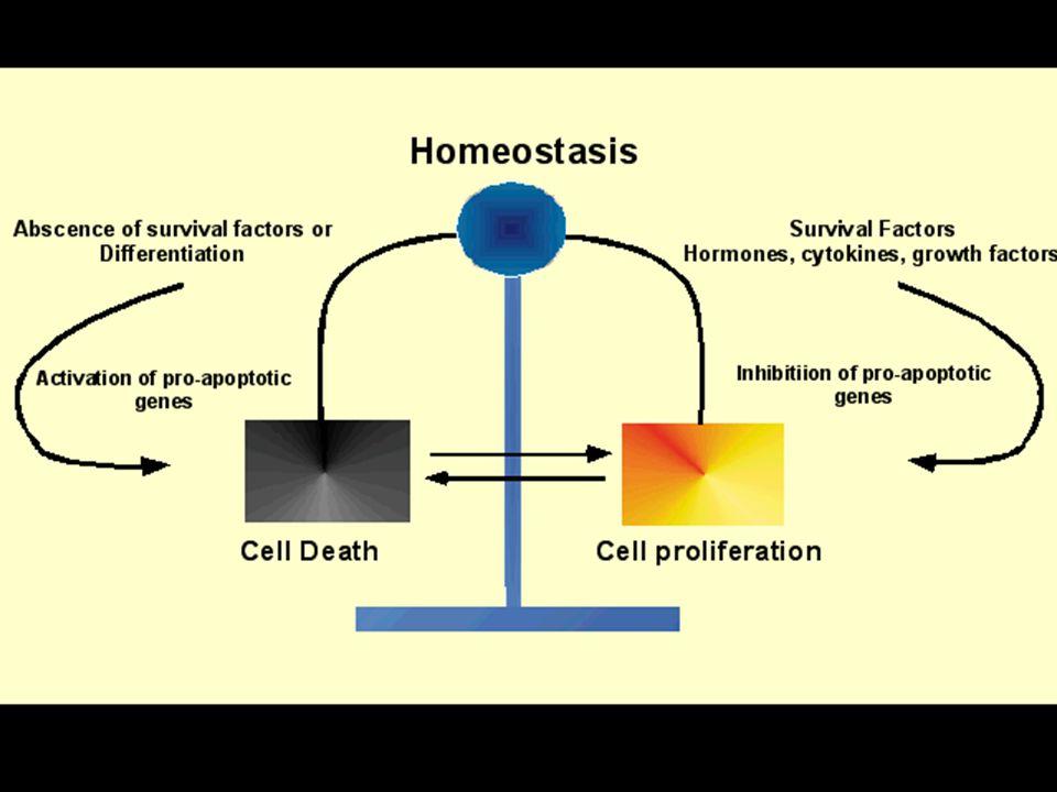 """Az immunrendszer """"fegyverzetei T sejt """"homing-járőrözés A tumor aktivál Immunmemória Állandó """"kemoterápia Nem toxikus Védelem a """"visszaesés ellen"""