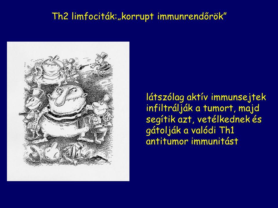"""látszólag aktív immunsejtek infiltrálják a tumort, majd segítik azt, vetélkednek és gátolják a valódi Th1 antitumor immunitást Th2 limfociták:""""korrupt"""