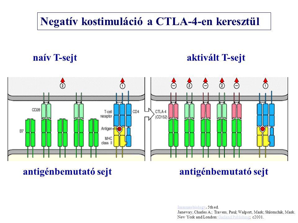 antigénbemutató sejt naív T-sejtaktivált T-sejt Negatív kostimuláció a CTLA-4-en keresztül ImmunobiologyImmunobiology. 5th ed. Janeway, Charles A.; Tr