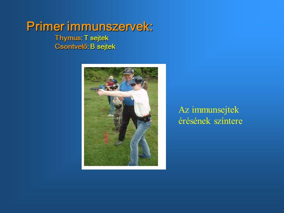Primer immunszervek: Thymus: T sejtek Csontvelő: B sejtek Az immunsejtek érésének színtere