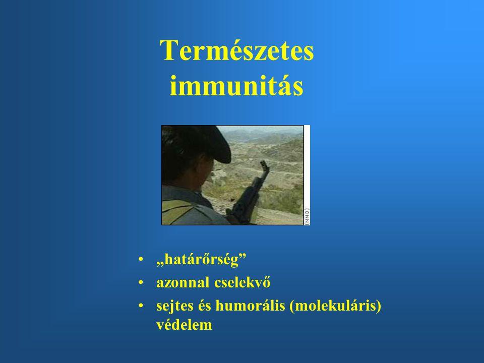 """Természetes immunitás """"határőrség azonnal cselekvő sejtes és humorális (molekuláris) védelem"""