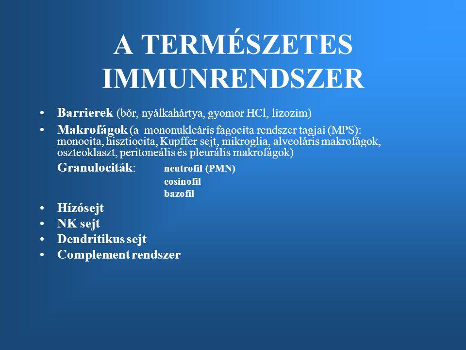 Barrierek (bőr, nyálkahártya, gyomor HCl, lizozim) Makrofágok (a mononukleáris fagocita rendszer tagjai (MPS): monocita, hisztiocita, Kupffer sejt, mikroglia, alveoláris makrofágok, oszteoklaszt, peritoneális és pleurális makrofágok) Granulociták: neutrofil (PMN) eosinofil bazofil Hízósejt NK sejt Dendritikus sejt Complement rendszer A TERMÉSZETES IMMUNRENDSZER