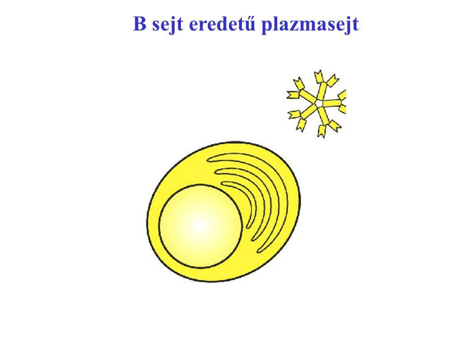 Figure 2-53 part 2 of 3 B sejt eredetű plazmasejt
