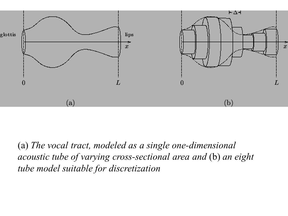 (a) The vocal tract, modeled as a single one-dimensional acoustic tube of varying cross-sectional area and (b) an eight tube model suitable for discretization