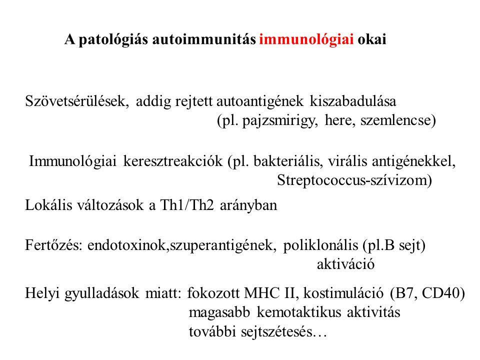 A patológiás autoimmunitás immunológiai okai Szövetsérülések, addig rejtett autoantigének kiszabadulása (pl. pajzsmirigy, here, szemlencse) Immunológi