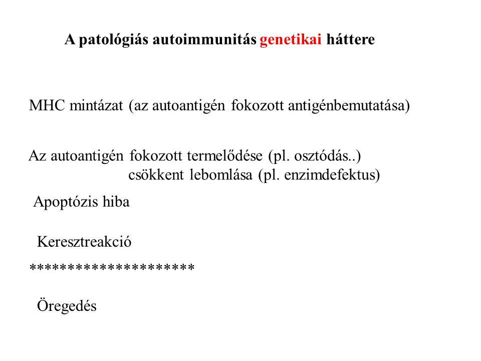 A patológiás autoimmunitás genetikai háttere MHC mintázat (az autoantigén fokozott antigénbemutatása) Az autoantigén fokozott termelődése (pl. osztódá