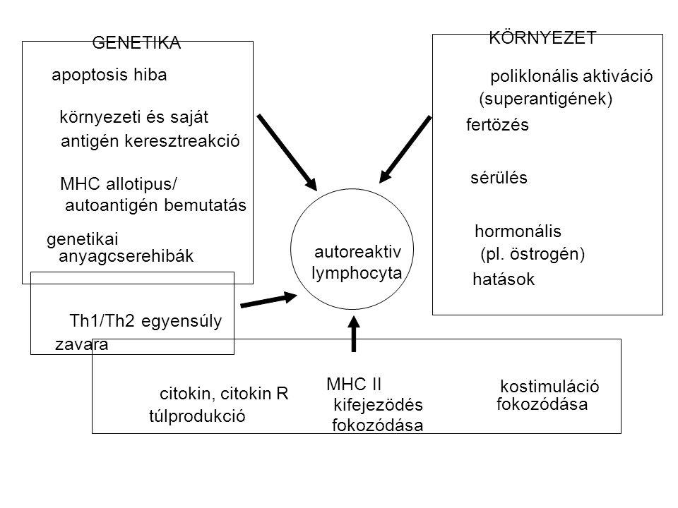 autoreaktiv lymphocyta apoptosis hiba poliklonális aktiváció (superantigének) citokin, citokin R túlprodukció környezeti és saját antigén keresztreakc