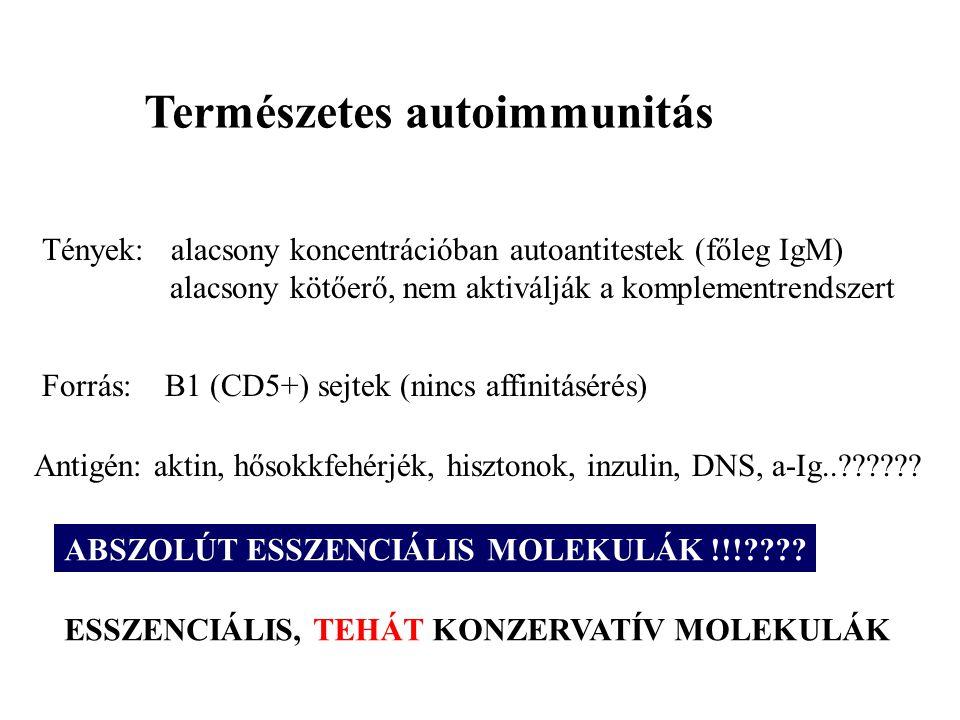 Természetes autoimmunitás Tények: alacsony koncentrációban autoantitestek (főleg IgM) alacsony kötőerő, nem aktiválják a komplementrendszert Forrás: B