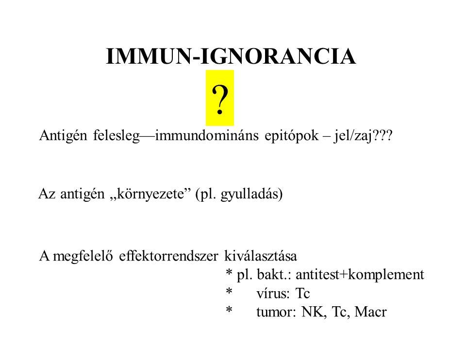 """IMMUN-IGNORANCIA Antigén felesleg—immundomináns epitópok – jel/zaj??? Az antigén """"környezete"""" (pl. gyulladás) A megfelelő effektorrendszer kiválasztás"""