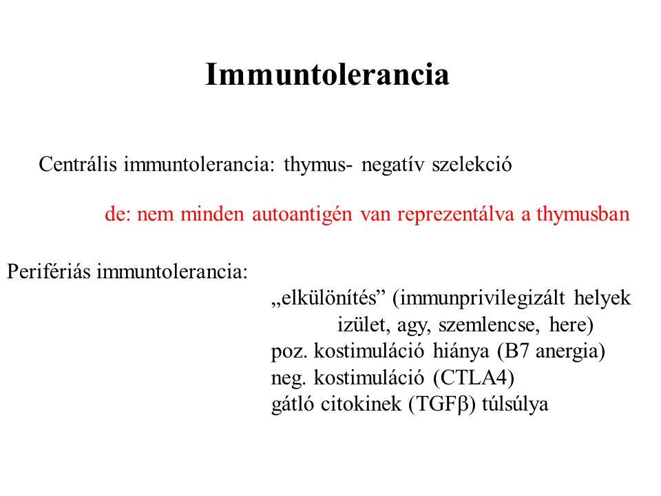 Immuntolerancia Centrális immuntolerancia: thymus- negatív szelekció de: nem minden autoantigén van reprezentálva a thymusban Perifériás immuntoleranc