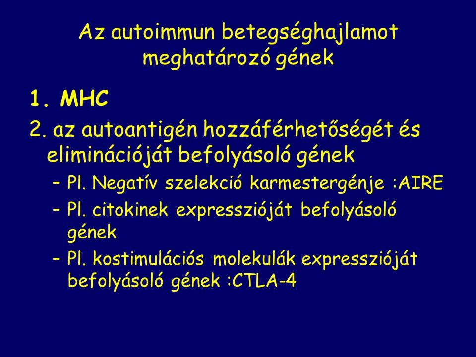 Az autoimmun betegséghajlamot meghatározó gének 1. MHC 2. az autoantigén hozzáférhetőségét és eliminációját befolyásoló gének –Pl. Negatív szelekció k