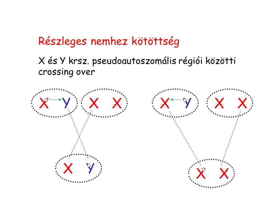 Részleges nemhez kötöttség X és Y krsz. pseudoautoszomális régiói közötti crossing over XX XY XYXYXX XX