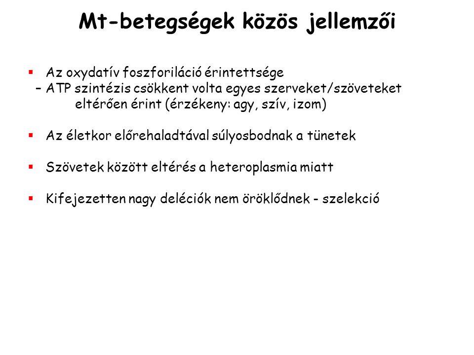 Mt-betegségek közös jellemzői   Az oxydatív foszforiláció érintettsége – ATP szintézis csökkent volta egyes szerveket/szöveteket eltérően érint (érz
