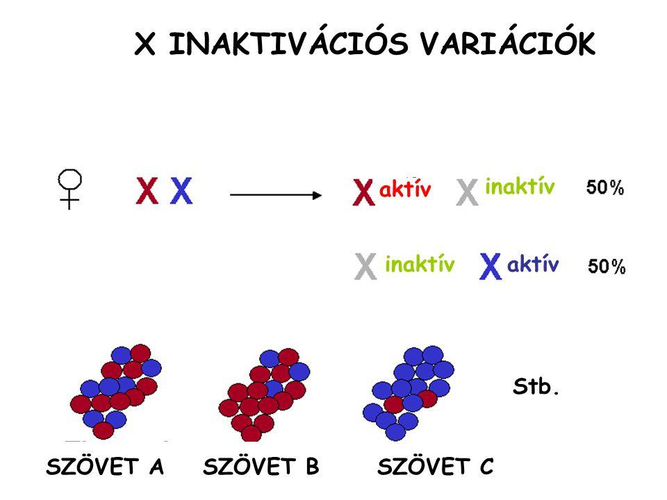 X INAKTIVÁCIÓS VARIÁCIÓK SZÖVET A SZÖVET B SZÖVET C Stb. aktív inaktív