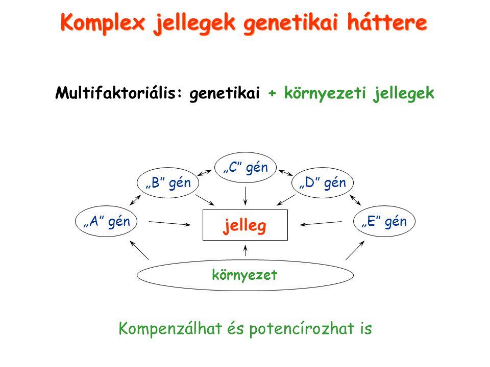 Genetikai terheltség a populációban komplex jelleg esetén +Környezeti hatások