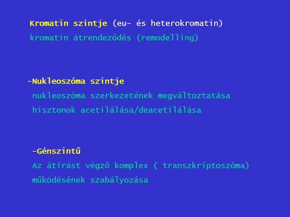 Kromatin szintje (eu- és heterokromatin) kromatin átrendeződés (remodelling) -Nukleoszóma szintje nukleoszóma szerkezetének megváltoztatása hisztonok