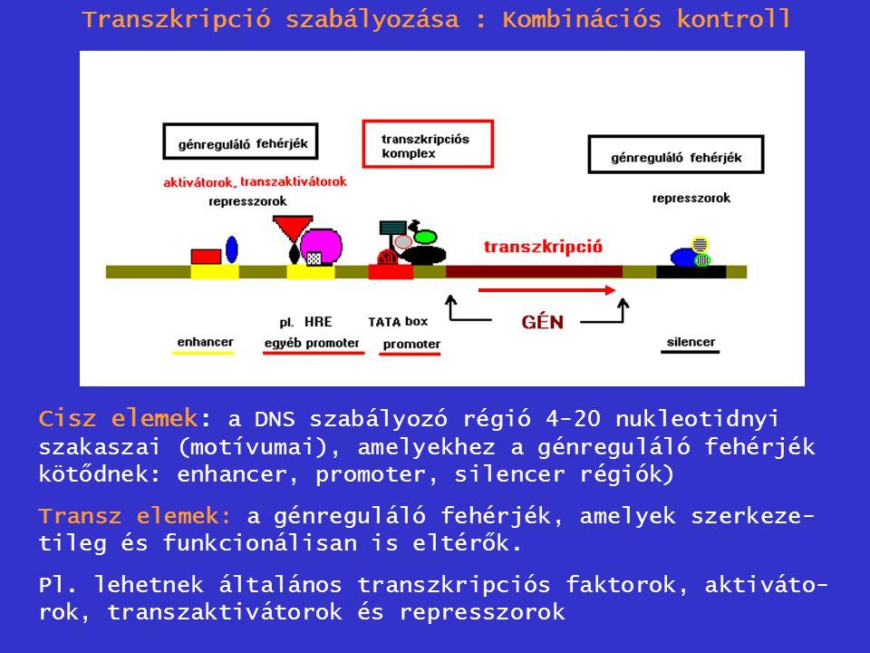 Transzkripció szabályozása : Kombinációs kontroll Cisz elemek: a DNS szabályozó régió 4-20 nukleotidnyi szakaszai (motívumai), amelyekhez a génregulál