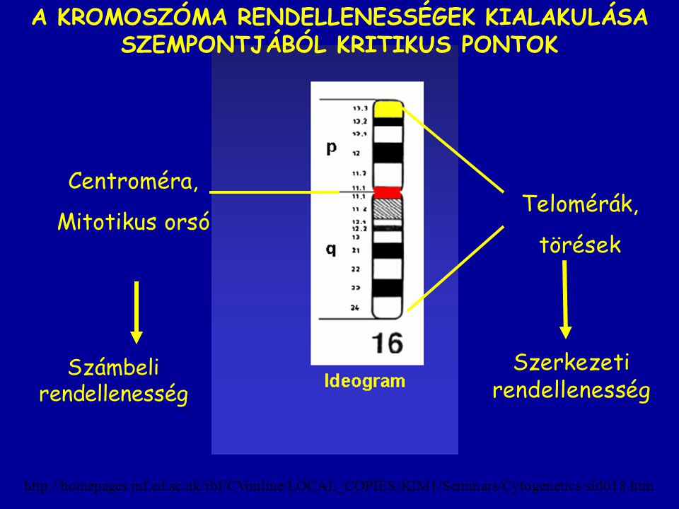 http://homepages.inf.ed.ac.uk/rbf/CVonline/LOCAL_COPIES/KIM1/Seminars/Cytogenetics/sld018.htm Telomérák, törések Centroméra, Mitotikus orsó Számbeli r
