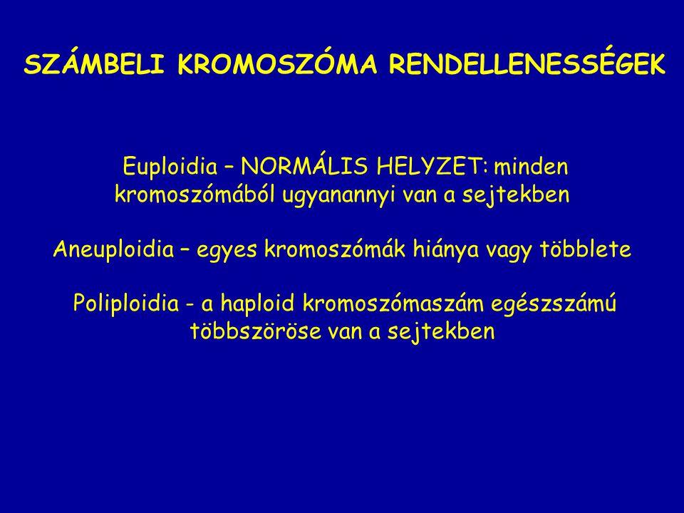 SZÁMBELI KROMOSZÓMA RENDELLENESSÉGEK Euploidia – NORMÁLIS HELYZET: minden kromoszómából ugyanannyi van a sejtekben Aneuploidia – egyes kromoszómák hiá