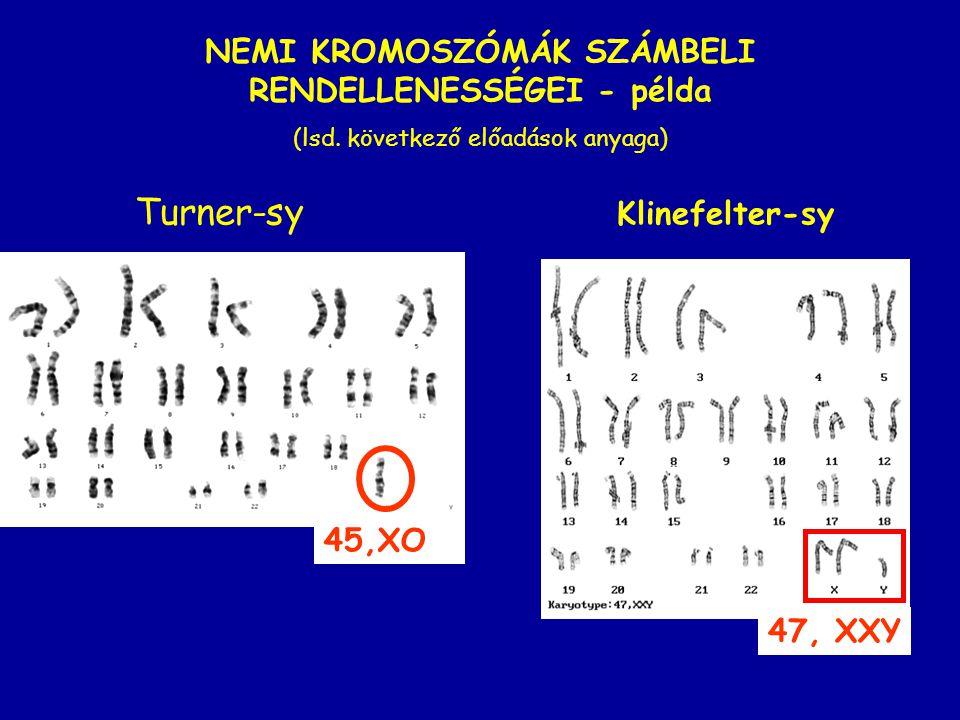 45,XO Turner-sy Klinefelter-sy 47, XXY NEMI KROMOSZÓMÁK SZÁMBELI RENDELLENESSÉGEI - példa (lsd. következő előadások anyaga)