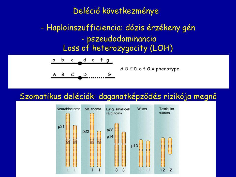 Loss of heterozygocity (LOH) - Haploinszufficiencia: dózis érzékeny gén Deléció következménye - pszeudodominancia Szomatikus deléciók: daganatképződés