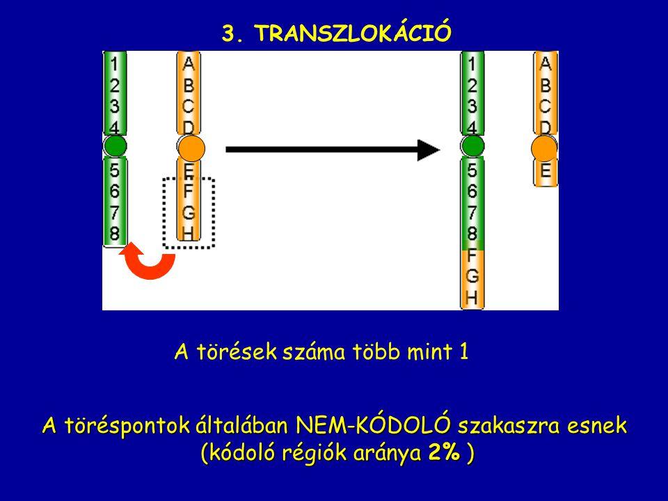 3. TRANSZLOKÁCIÓ A töréspontok általában NEM-KÓDOLÓ szakaszra esnek (kódoló régiók aránya 2% ) (kódoló régiók aránya 2% ) A törések száma több mint 1