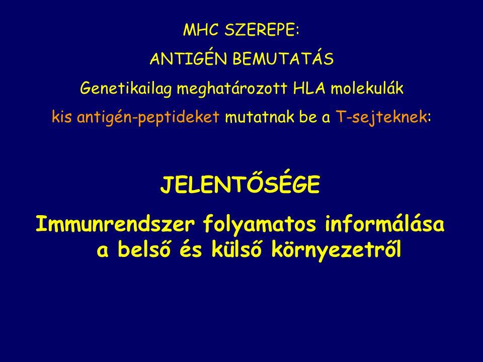 MHC SZEREPE: ANTIGÉN BEMUTATÁS Genetikailag meghatározott HLA molekulák kis antigén-peptideket mutatnak be a T-sejteknek: JELENTŐSÉGE Immunrendszer fo