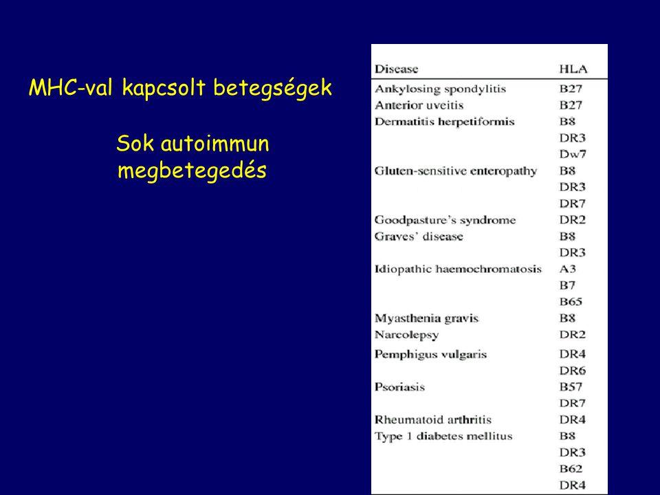 MHC-val kapcsolt betegségek Sok autoimmun megbetegedés