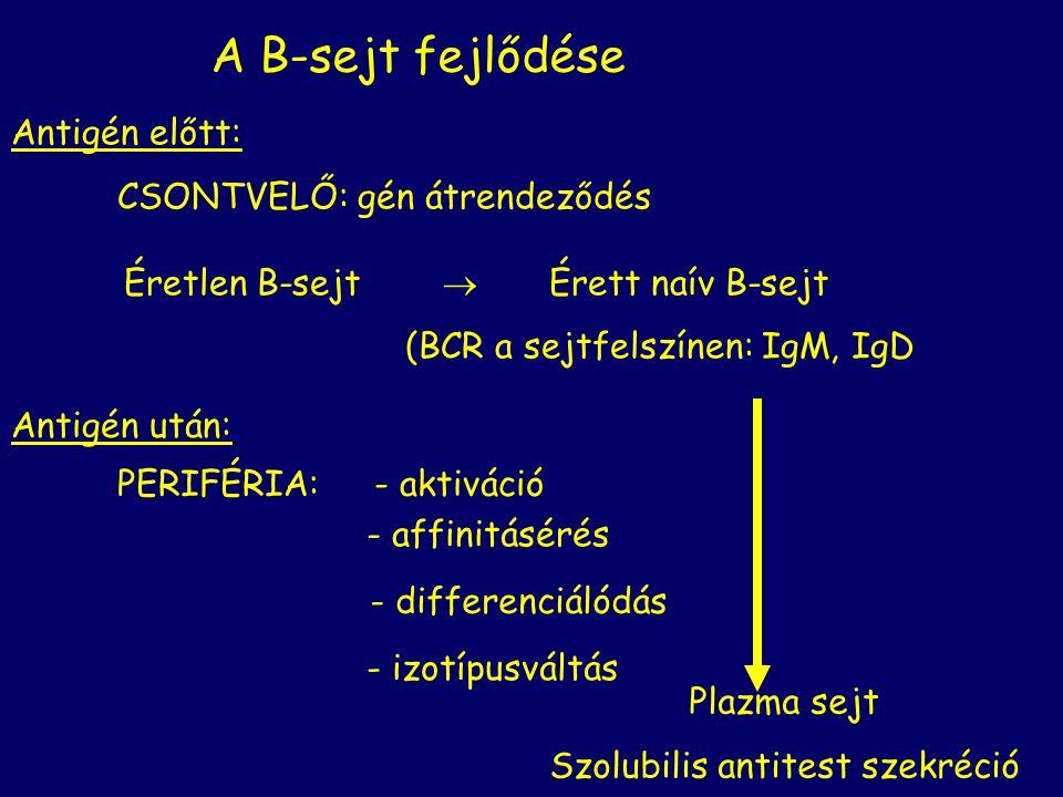 neutralizálás opszonizálás Antitest függő celluláris citotoxicitás Komplement aktiválás Antitest függő effektor mechanizmusok Az antitest Fc régiója által mediált Fc