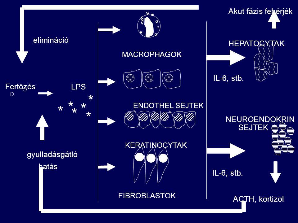 kiváltó ingerek baktérium (endotoxin) virus szövet elhalás égés, stress jelzorendszer máj akut fázis reakció citokinek (IL-6, TNF, IL-1 LIF, IL-11) sejtek (makrophag, endothel keratinocyta, fibroblast) hemosztázis gyökfogók komplement antiproteázok akut fázis fehérjék