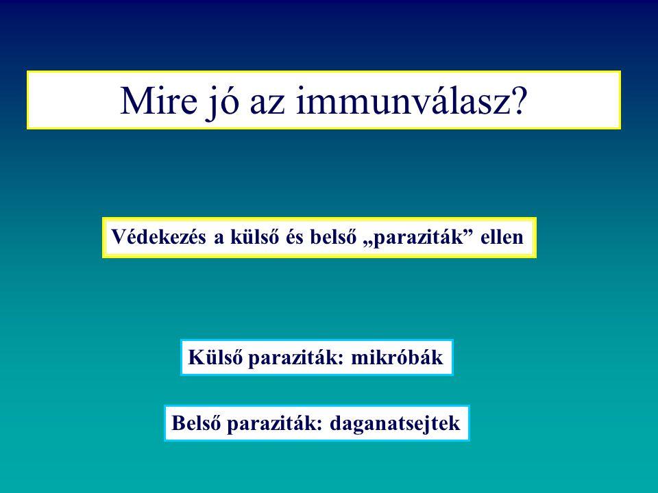 A fertőzés immunológia alapjai  az infectológia tárgya  fertőzés mint interakció  az immunrendszerválasza: bakteriális parazita vírus ellen  túlélési stratégiák