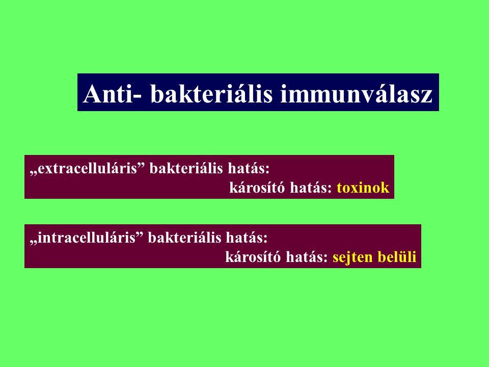A fertőző mikróba hatásának lokalizációja