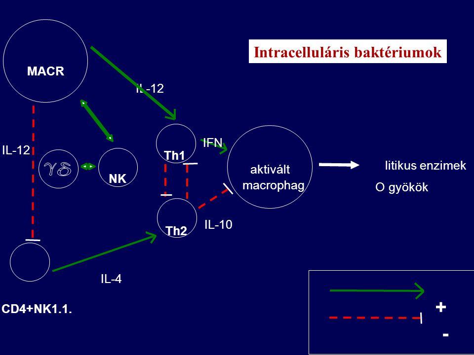 BAKTÉRIUMOK szénhidrát antigén B ly antitest neutralizáció opszonizáció fagocitózis komplement aktiváció baktérium lizis gyulladás C3b opszonizáció fagocitózis citokinek IFN TNF antitest válasz aktiváció fagocitózis killing gyulladás CD4+ Th antigén bemutatás feldolgozás T-independens T-dependens Extracellulárisan ható baktériumok