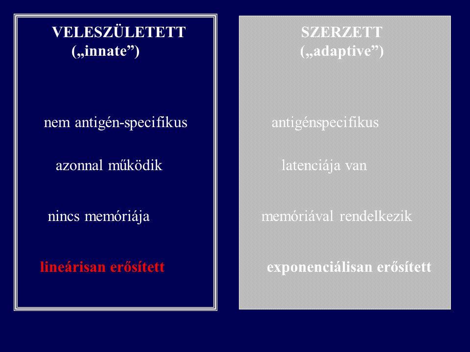 Az akut gyulladás (szisztémás akut fázis reakció) Természetes immunválasz egyik mechanizmusa Univerzálisan bekövetkezik szövetsérülés után Feladata –a nekrotikus és fertőzött szöveti területek elhatárolása –a fertőző agens eliminációja –hemostasis –a regeneráció inicializálása –a krónikus gyulladás gátlása Mechanizmusa – (gyulladásos) mediátor (citokinek, eikozanoidok, oxidatív gyökök) kaszkád okozta gyulladásos sejtek (MF, GC) aktiváció és infiltráció (extravazáció).