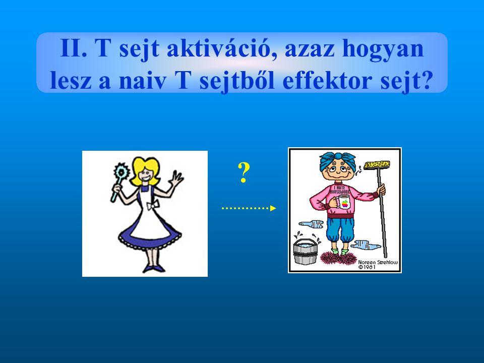 II. T sejt aktiváció, azaz hogyan lesz a naiv T sejtből effektor sejt? ?