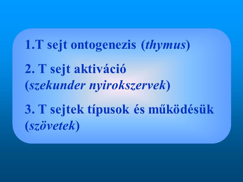 1.T sejt ontogenezis (thymus) 2. T sejt aktiváció (szekunder nyirokszervek) 3. T sejtek típusok és működésük (szövetek)