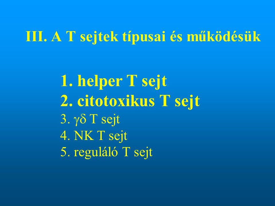 III. A T sejtek típusai és működésük 1. helper T sejt 2. citotoxikus T sejt 3.  T sejt 4. NK T sejt 5. reguláló T sejt