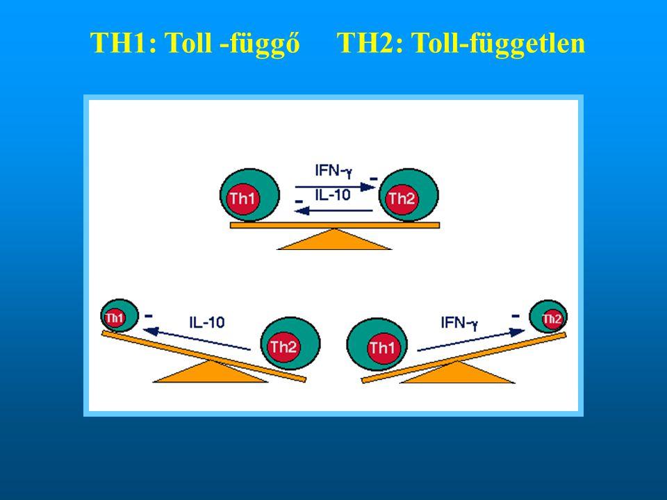 TH1: Toll -függőTH2: Toll-független